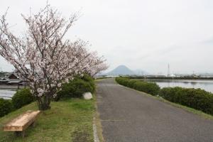 なんとか池の桜3