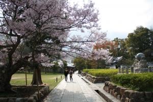 屋島の桜1