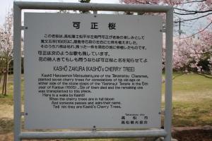 屋島の桜2