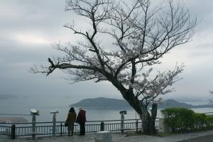 屋島の桜6