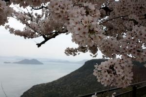 屋島の桜8