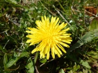 170328野の花A(320x240)