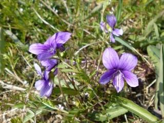 170328野の花B(320x240)