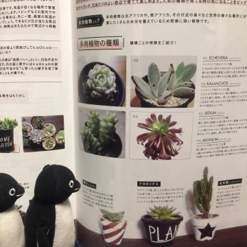 20170218-多肉植物 (6)