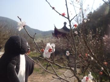 20170304-中国 (13)