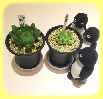20170218-多肉植物 (3)-加工