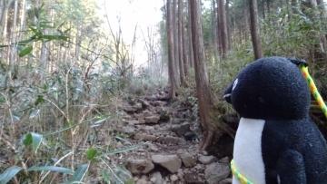 20170319-山登り (3)