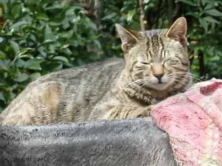 003_convert_20170320142534猫春眠