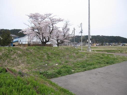 1629_yoita.jpg