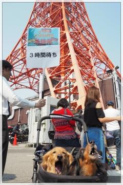 H29031903東京タワー台湾祭