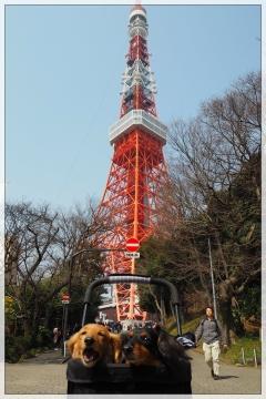 H29031902東京タワー台湾祭