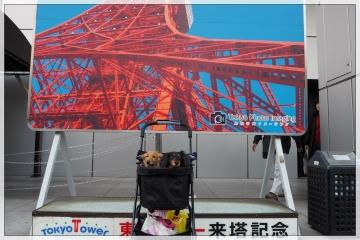 H29031908東京タワー台湾祭