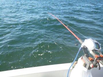(2)ひさしぶりのアジ釣り