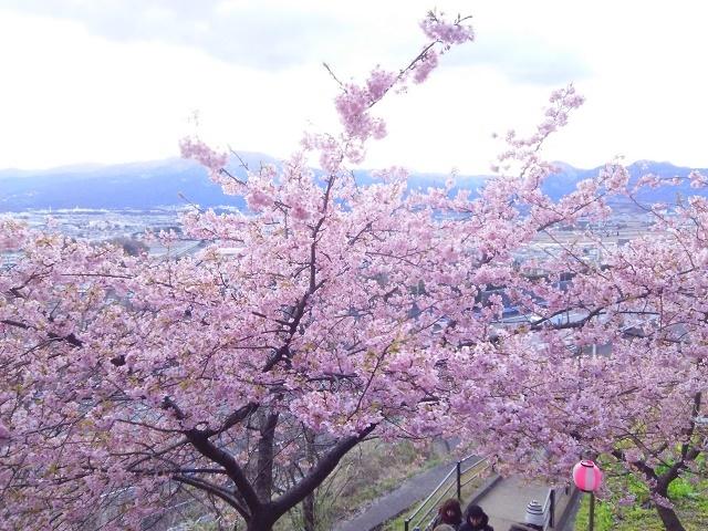 290213桜5