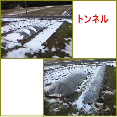 2月14日トンネル修理
