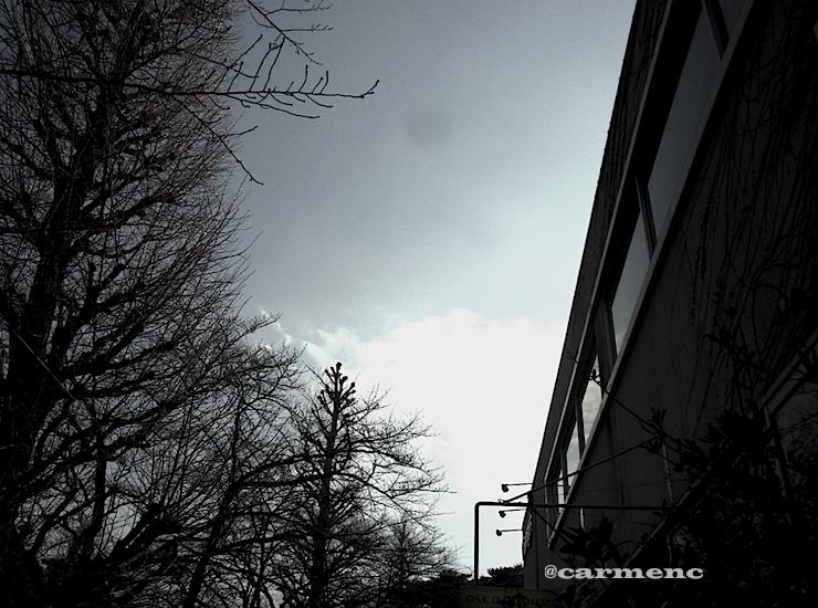 冬の空と桜モノクロ風