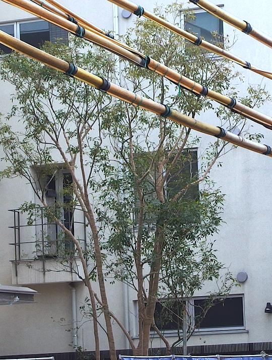 竹フェンスの向こうの樹