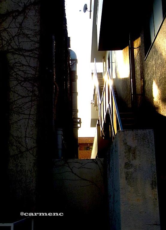蔦とビルの夕日