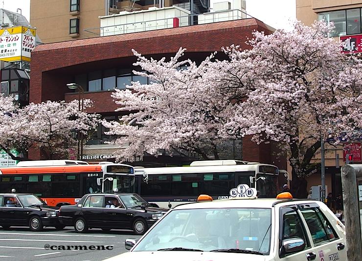 駅前タクシーと桜