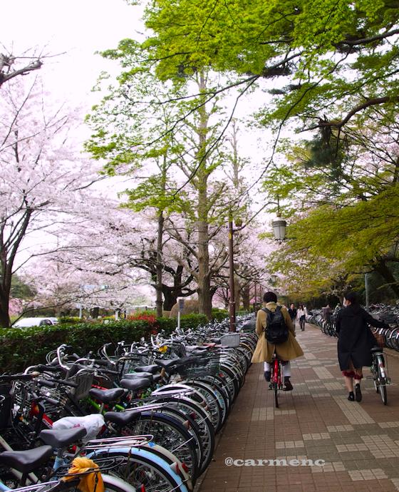 桜と紅葉と自転車