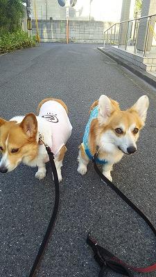 s-夕散歩(1