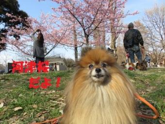 0226水元公園 081