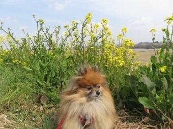草むらに鼻突っ込む (3)