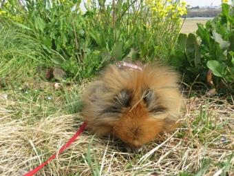 草むらに鼻突っ込む (2)