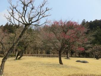横川SA (5)
