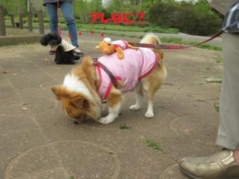 ベビーシッター中 (2)