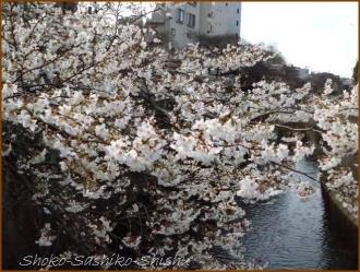 20170327  花の様子  9   桜は