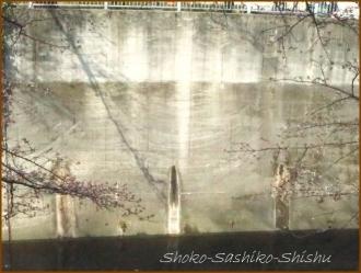 20170327  川面に  2   桜は