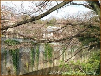 20170327  川面に  3   桜は