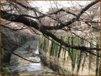 20170327  川面に  4   桜は