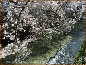 20170402  カメラ  2   お花見