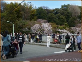 20170402  カメラ  5   お花見