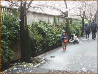 20170402  神田川  1   お花見