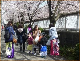 20170402  鳩  3   お花見