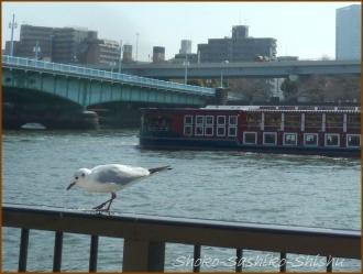 20170404  隅田川  4   向島散歩