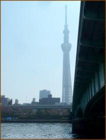 20170404  隅田川  5   向島散歩