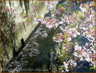 20170415  川の上  1   散りゆく桜