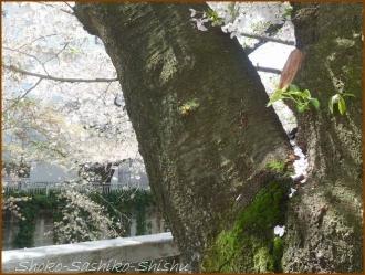 20170415  川の上  9   散りゆく桜