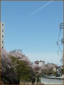20170415  川の上  14   散りゆく桜