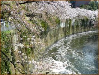 20170415  川の上  15   散りゆく桜