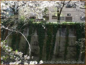 20170415  川の上  18   散りゆく桜