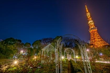 2017-3-29 東京タワー07 (1 - 1DSC_0055-HDR)_R