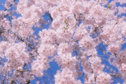 2017-4-3 慈眼寺03 (1 - 1DSC_0009)_R