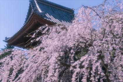 2017-4-3 慈眼寺07 (1 - 1DSC_0020)_R