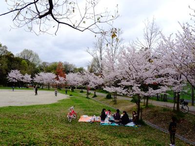 DSC00044a_芝生公園2