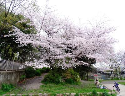 DSC00046a_芝生公園1